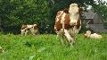 Directive nitrates - La r�glementation fran�aise plus s�v�re que chez nos voisins europ�ens ?