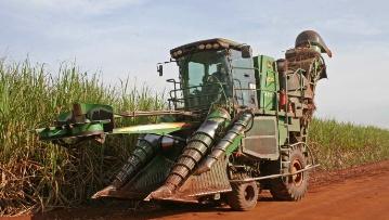 Chantier de récolte de cannes à sucre.