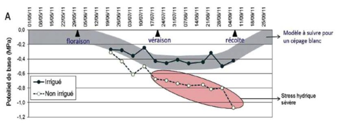 le potentiel de base traduit le desséchement de la plante : ici, l'irrigation permet de maintenir la vigne dans une trajectoire hydrique optimale, avec un stress hydrique modéré qui démarre à la floraison-nouaison et qui est maximal à partir de la véraison, correspondant à la période de maturation du raisin