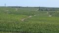 Gaillac - L'appellation Vendanges tardives tire les blancs vers le haut de gamme