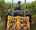 Viticulture - Une moyenne de 240 installations par an r�alis�es par les Safer