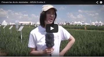 Pr�venir la r�sistance des dicotyl�dones aux herbicides