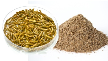 L'�levage d'insectes valorisera nos d�chets pour nourrir nos animaux