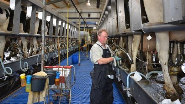 + 3 kg de lait par vache avec trois traites par jour