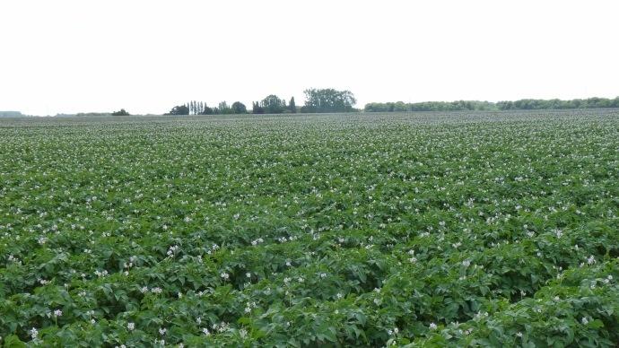 Estimations productions de pommes de terre conservation 2015 - Pomme de terre conservation ...