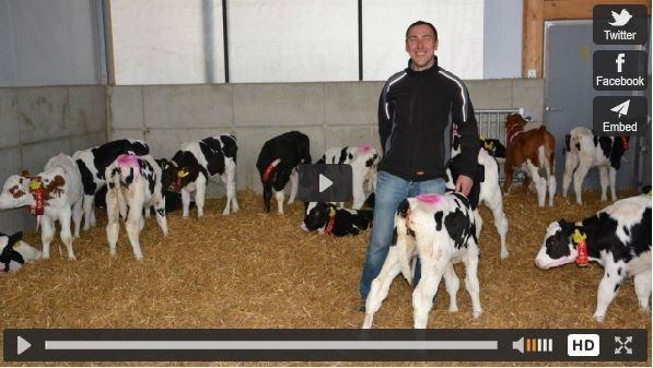 Allemagne vaches laitières