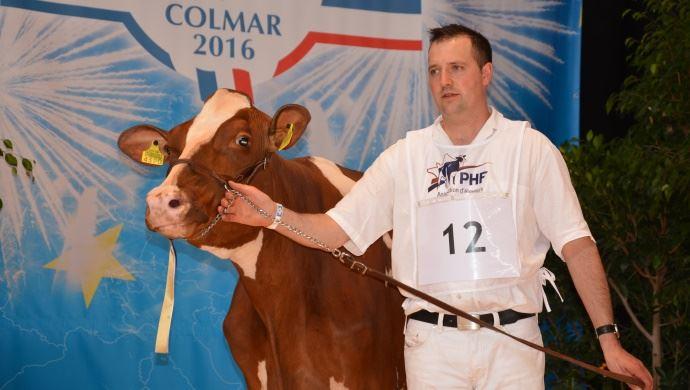 L'indétrônable éleveur suisse Roger Froissard obtient la première place des red holstein en 1er veau avec Ptit Cœur Armani BARBOTINE.