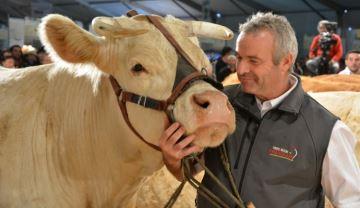 Suivez les concours du ring viande en direct du Z�nith d'Auvergne
