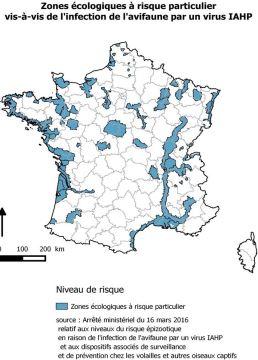 Risque «élevé » de grippe aviaire dans une partie de la France