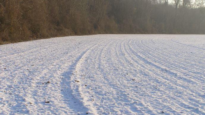 Neige dans une plaine