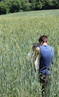 Variété rustique de blé