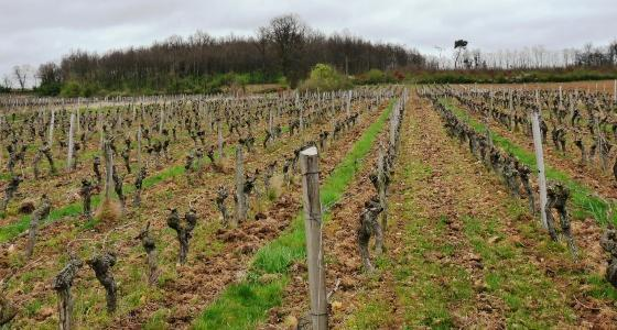 Impact de la viticulture biologique sur la qualité du sol
