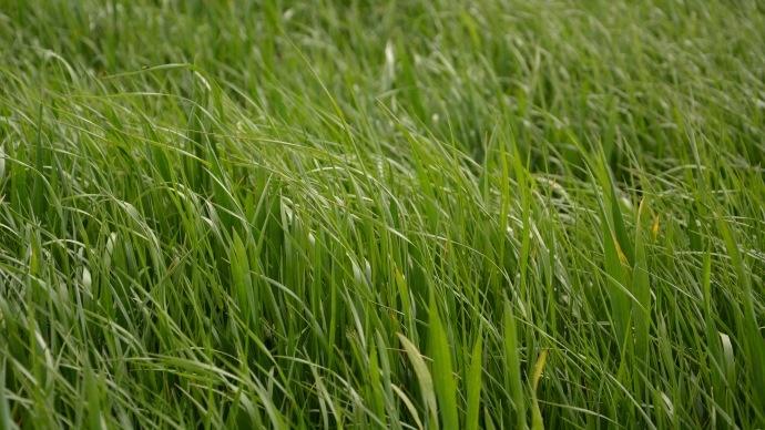 Le faux-semis pour réduire le stock semencier d'adventices dans les parcelles