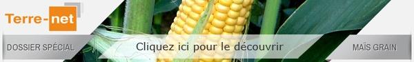 Dossier spécial Maïs grain Terre-net