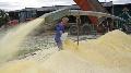 Ma�s grain humide - Des surfaces en nette progression chez les �leveurs