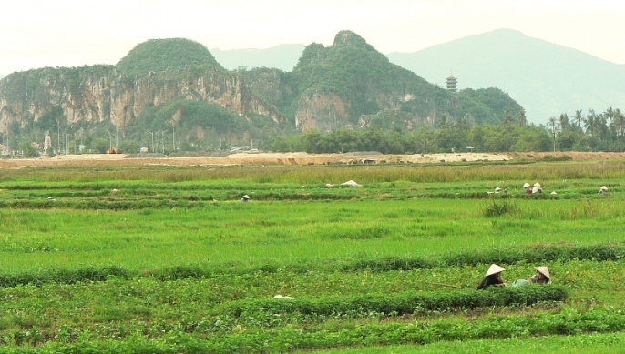 La culture du riz est préférée à celle du blé.