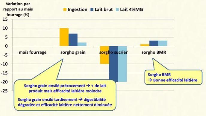 Les ensilage de sorgho grain et de sorgho Bmr