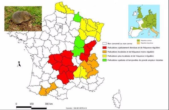 Carte de France du Campagnol terrestre