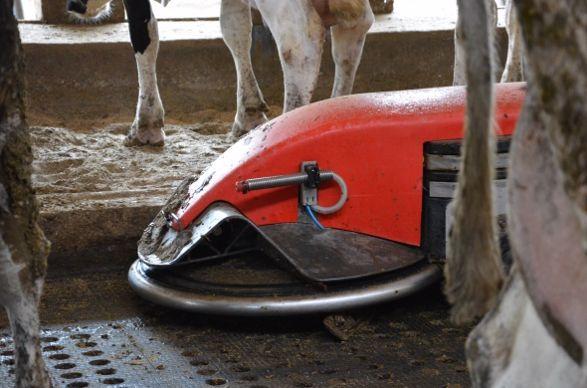 Les tapis qui couvrent les caillebotis sont nettoyés par le robot Lely Discovery