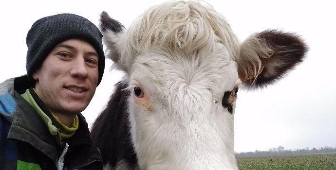 Raphaël Spruytte et l'une de ses vaches Normandes