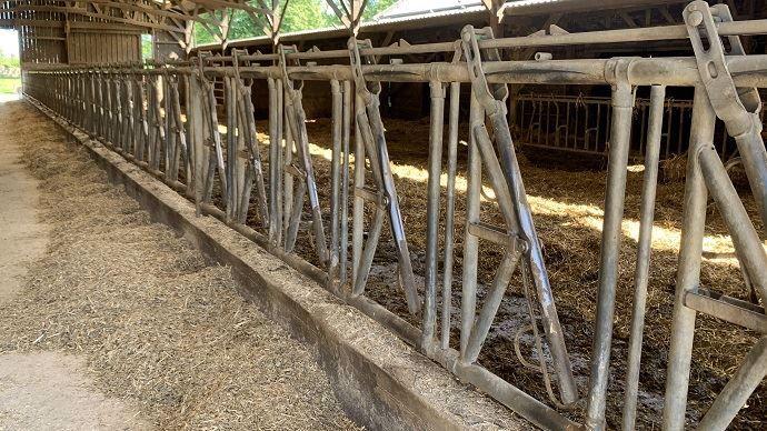 Stabulation vaches laitières aire paillée