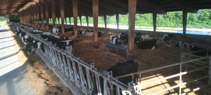 Aire paillée vaches laitières