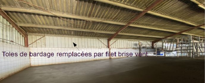 filet brise vent dans stabulation d elevage