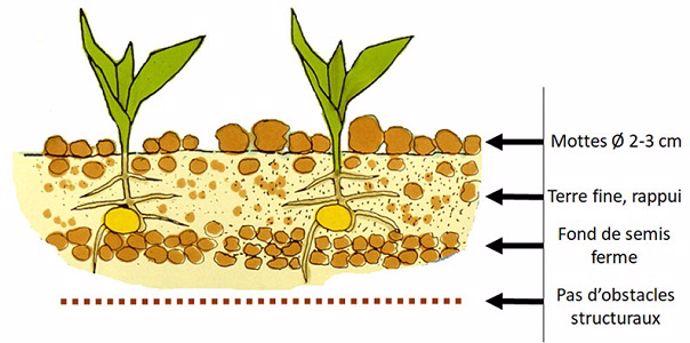 Préparation du sol pour une bonne implantation du maïs