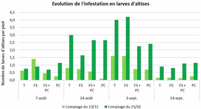Evolution de l'infestation en larves d'altises
