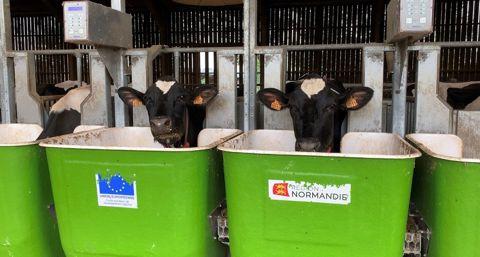 Effialim: une étude de l'Inrae pour mesurer l'efficience alimentaire des vaches laitières