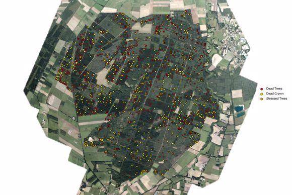 L'algorithme distingue par des points de couleurs les arbres morts, les couronnes deséchées et les arbres eb stress hydrique