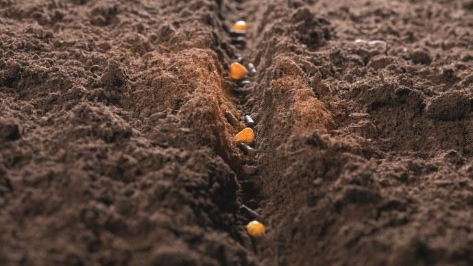 explOrer se positionne auprès de la graine de maïs.