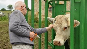 275 bovins abattus après deux cas dépistés dans la Loire