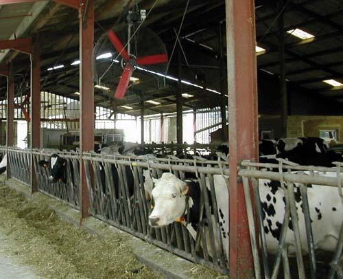 Il faut compter un ventilateurs vertical pour une dizaine de vaches.