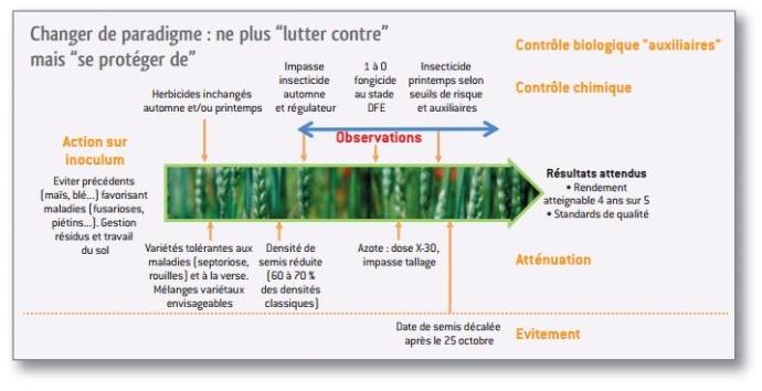 Conduite intégrée du blé