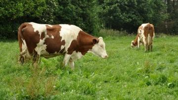 L'Inra se dote d'une infrastructure pour l'élevage de montagne unique en Europe