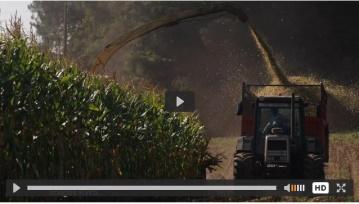 KWS améliore la digestibilité de ses fourrages et élargit son offre en grain