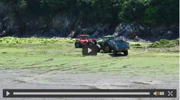 Olmix transforme les algues bretonnes en solutions pour animaux d'élevage