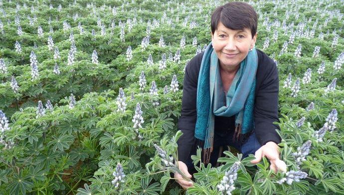 Elisabeth Bouchet dans son champ de lupins d'hiver