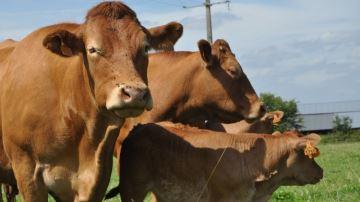La production et les abattages en forte hausse en novembre