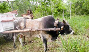 Vache nantaise, b½uf Moka, brebis Sasi Ardi et Boulonnaise récompensés