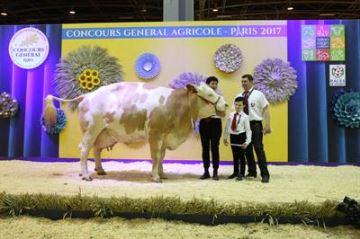 Fameuse remporte le concours de la race simmental