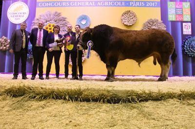 Indigo, champion mâle appartient au Gaec Maison Guillemet (49)