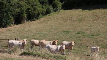Envisagez-vous de passer votre élevage en agriculture biologique?
