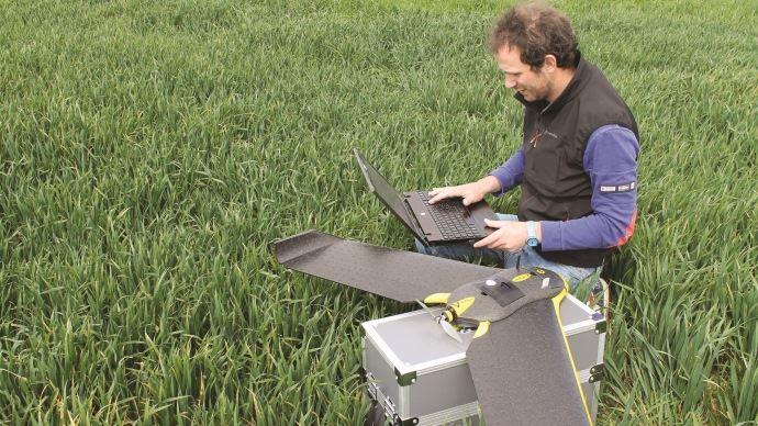 Drone dans une parcelle de blé