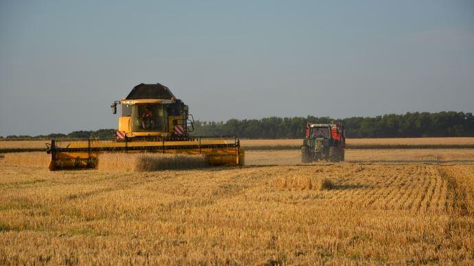 L'épisode de canicule de ces derniers jours va échauder une partie des grains français et réduire ainsi le potentiel de rendement en blé tendre.
