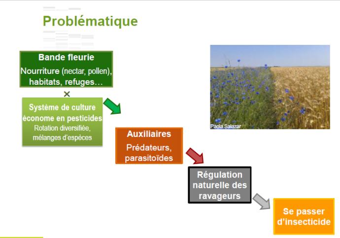 Se passer d'insecticide, l'objectif ambitieux du projet Gargamel.