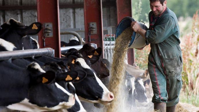 Des céréales peuvent être semées pour l'autoconsommation des vaches