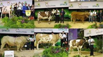 Palmarès, photos et vidéos de tous les concours bovins du Space