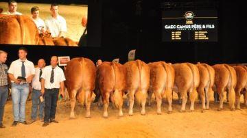 Tous les palmarès des concours bovins